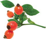 png rose hip